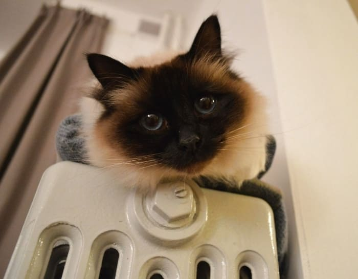батарея кот