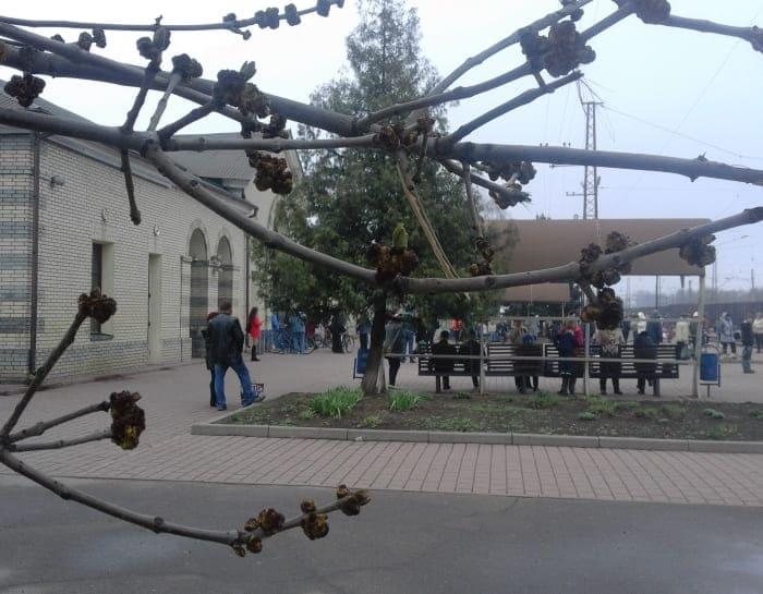 станция Лихачево
