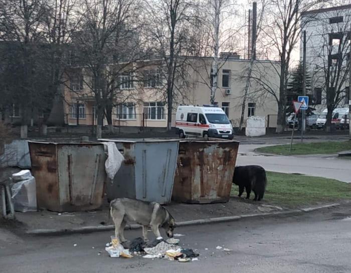 мусор собаки